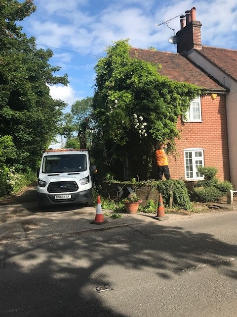 Garden maintenance of creepers in Haywards Heath