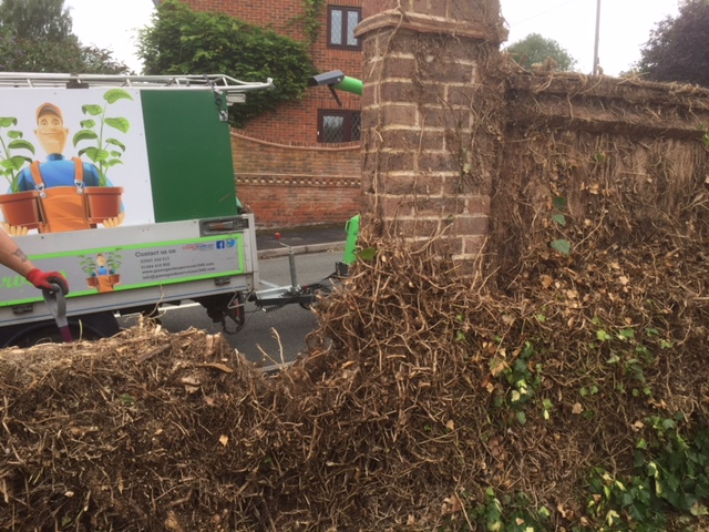 Garden Maintenance clearing ivy near Haywards Heath